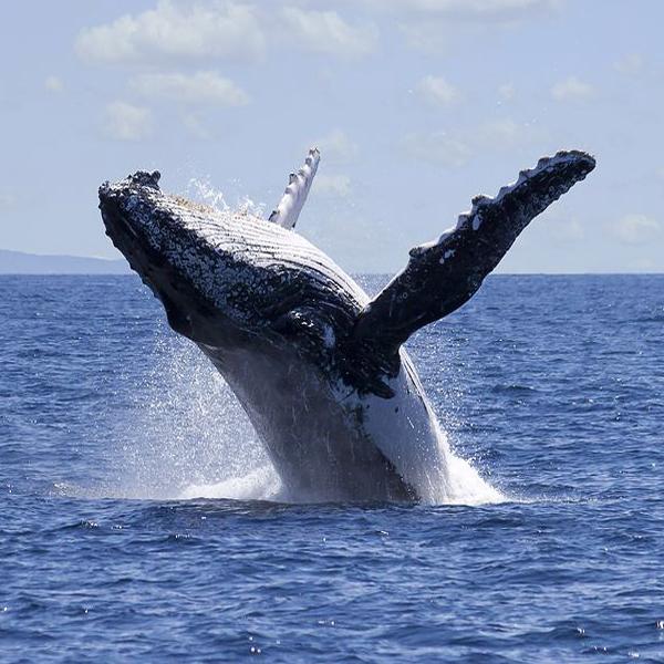 WhaleWatching_600x600